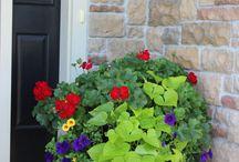 Gardening ideas / by Marnie Wilburn