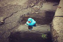 Rubber Ducks  / by Elizabeth Kelso