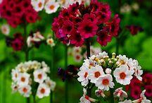 Flowers / by Rita ter Hedde