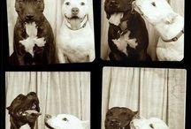 Pets / by Christine Vrablic