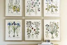 Botanicals / by Sara Parr