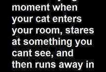 Funny Stuff! / by Mandy Newman