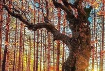 Trees / There is something magical about trees!! / by Sheri Gareau