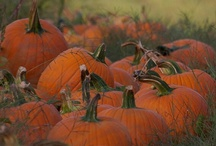 Pumpkins / by Anneke Neve