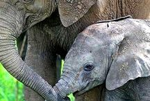 Elephant Obsession / by Bethany Deakins