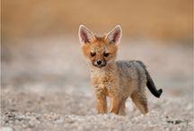 animals / by Richard Wingard