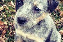 Puppy!! / by Kasara Hull