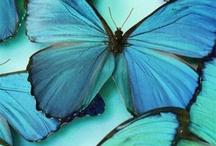 KLEURINSPIRATIE ✽ Vlinders   Butterflies / De mooiste kleuren komen uit de natuur. Laat je inspireren door de meest bijzondere vlinders en hun verrassende kleurcombinaties en pas deze kleuren toe in je interieur! Ik help je graag met een kleuradvies op maat. Kijk op www.stijlidee.nl en vraag vrijblijvend een offerte aan via info@stijlidee.nl  / by STIJLIDEE Interieuradvies en Styling