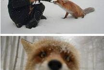 Animals / by Kora Koch
