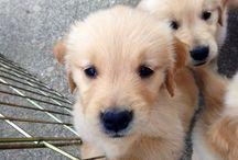 dogs / by Marissa Madison
