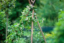 garden type stuff / by Sherri Monteith