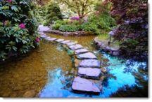 Japanese Gardens / by Paul J. Ciener Botanical Garden