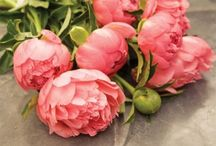 Peonies <3 / by Marianne Mayer
