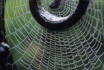 Spider Webs! / by Lauren Blair-Cochran