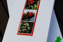 photography greeting cards / by beautiful swag