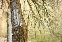 Lovely Trees  / Trees nourish my Spirit.  / by Ida Pintye Gajate