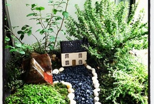 Terrariums and Miniature Gardens / by Margaret