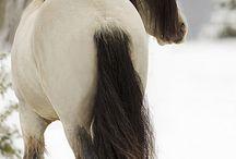 Horses / by Anastasia Kendlick