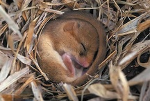 Sleeping Animals / Animals need their beauty sleep too! What's more irresistible than looking at pictures of sleeping animals?! / by Memory Foam Warehouse .