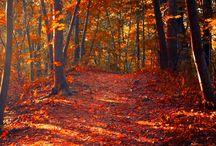Autumn / by Tracy Martinez