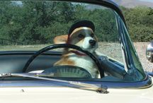 Corgis At The Wheel! / by Daily Corgi