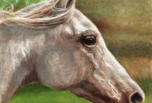 Equine Personality .... Head Shots / by Elizabeth England