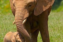 Elephants  / by Katelyn Lee
