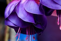 Flowers..through the lens / by Jocelyn Allaire