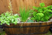 Gardening / Definitely want to try out gardening in the future. / by Chantay