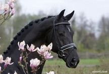 Heavenly Horses / by Heather Farar