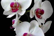 Orchids / by Garden Design