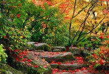 Amazing Autumn / by Walpole Outdoors
