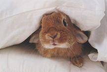 Bunny love / by cath Bunn