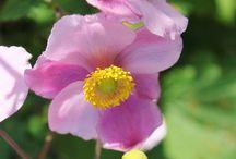 flowers / by Darlene Oswalt