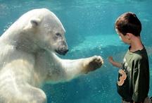 Enrichment in zoos & aquariums / by Polar Bears International