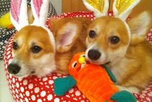 Corgilicious / OCD... obsessive *Corgi* disorder. Inspired by own Corgirillas: Lady Bird and Dutch / by The Supper Model by Darcy Jones