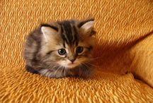 Cats / by Megan Danielle