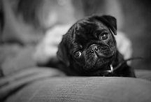 Dream Dog / by Nadia Kwok