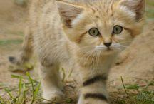 Cats / by Stephanie Kelly