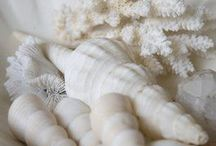 Seashells and Sea Life / Things I find on the beach / by Lu Bram