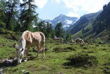 Wandern im Pitztal / by Pitztal Tirol Tirol
