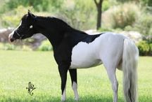 Horses / by Gina Creekmore