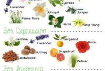 Herbs & Oils / by Anatalia Rose