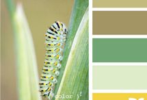 Color palettes / by Elsa Taricone