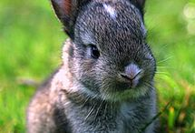 Iva bunnies / by Lynne & Gail