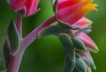 Succulents / by Kate Schnetzer