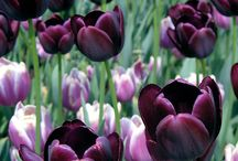 Purple Purple Purple / by Gayln Saltzman