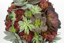 Artificial Plants and Trees / silk greenery, cacti, succulents, flowering, bushes, palms, and anything related to artificial foliage.  / by Artificial Plants & Trees for Commercial Use
