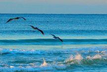Beach life / by Earl Croft