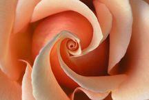 Les Fleurs / by Yvonne Brodkin